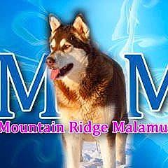 Mtn Ridge Malamutes